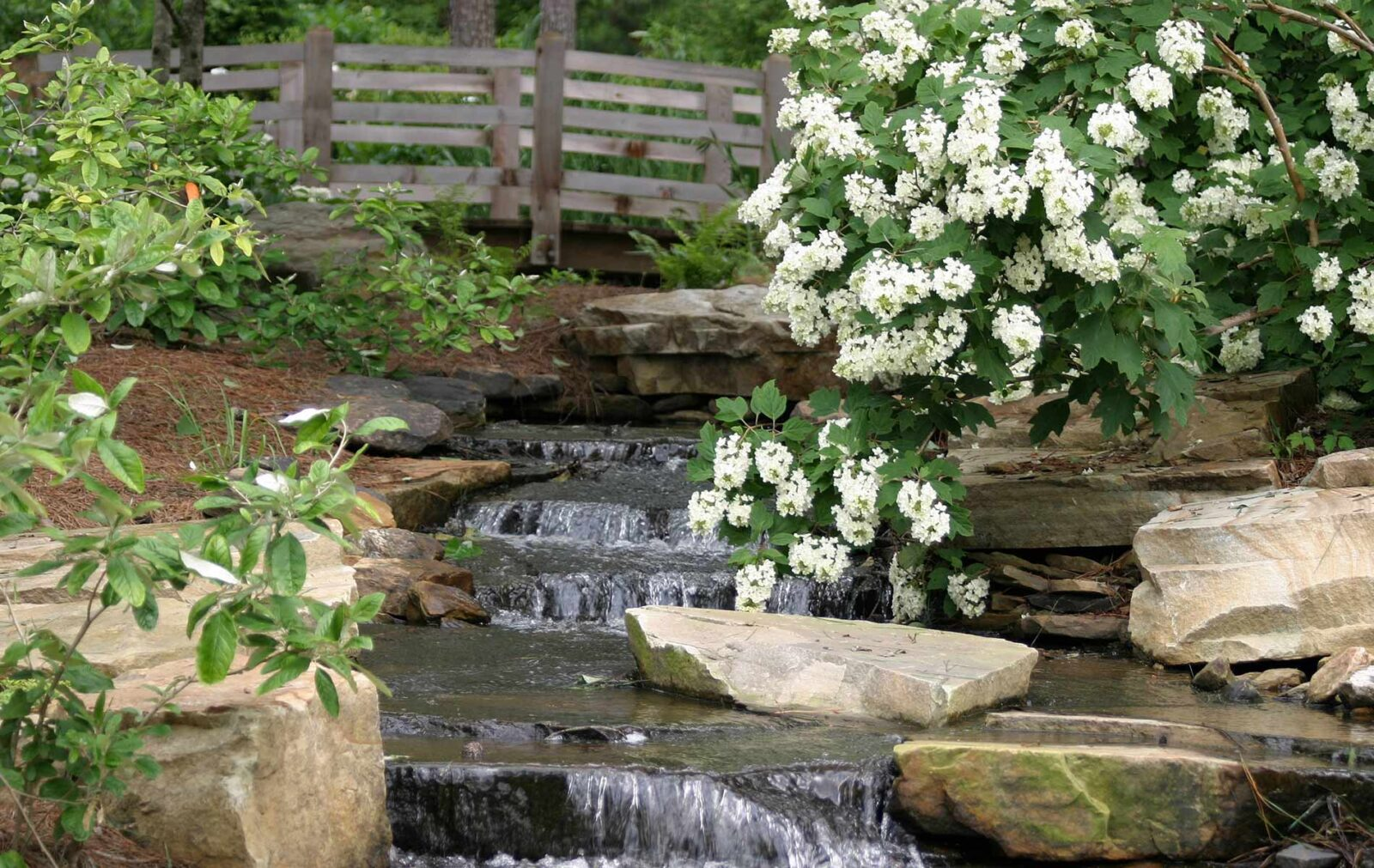 Aldridge Gardens Specializes In Hydrangeas