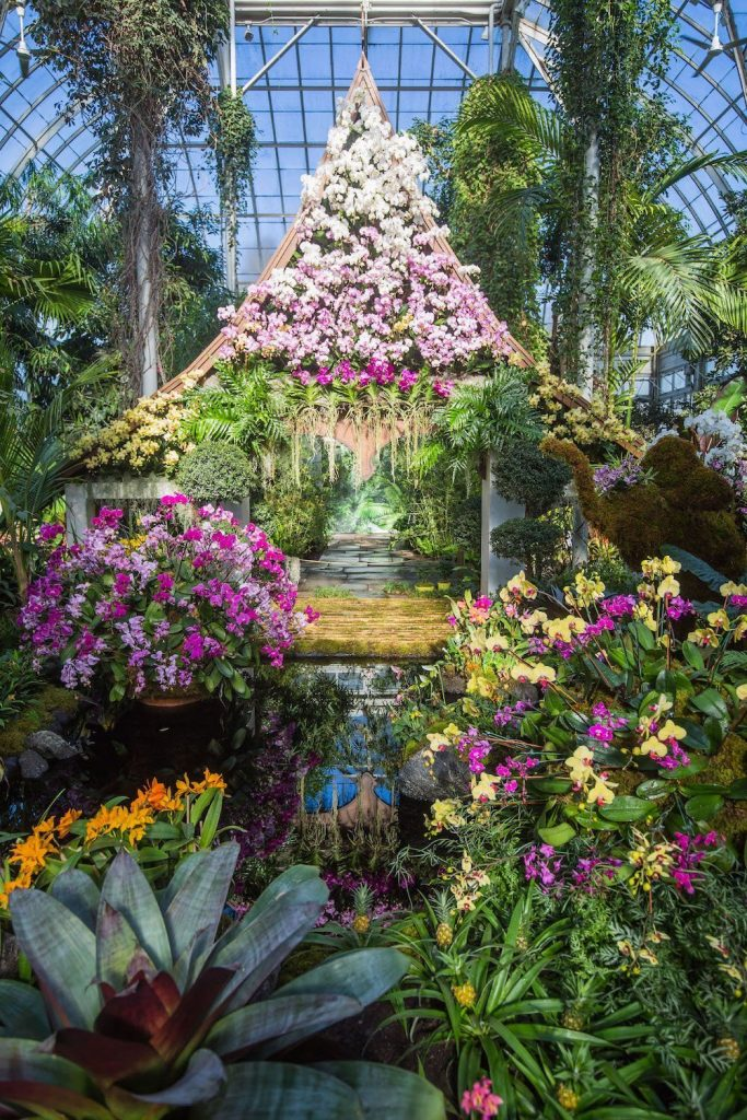 NYBG Orchid Show in 2018