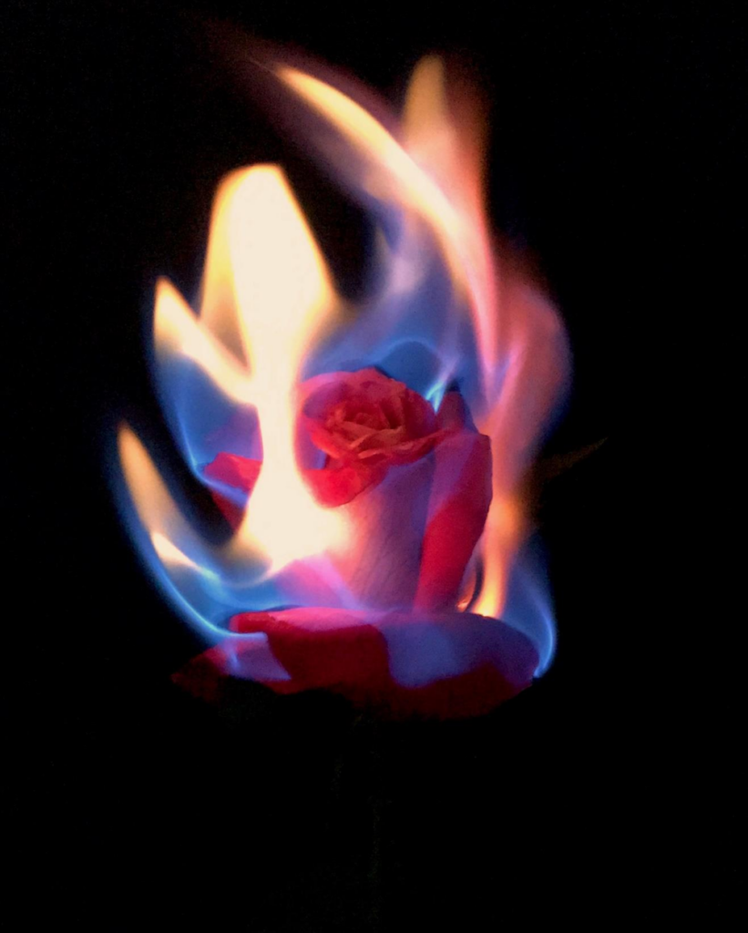 rose on fire by Kristine Russell