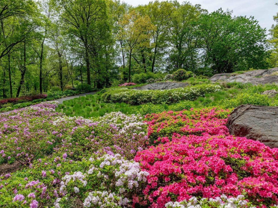 New York Botanical Garden Azalea Garden