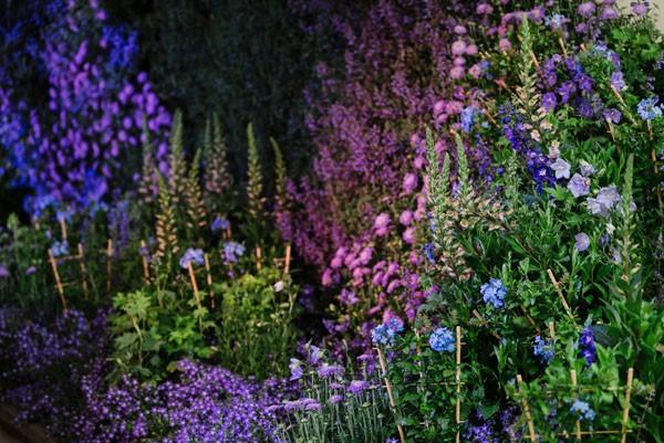 Chelsea Flower Show Georgi Mabee